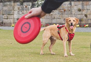 Hundtillbehör | Arrak Outdoor