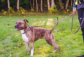 Hundkoppel och Hundhalsband | Arrak Outdoor